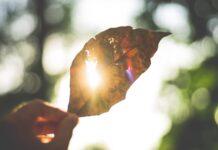 слънце, есен, листо